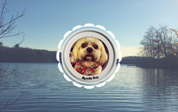 Dog named Benny on photo of pond meadow park