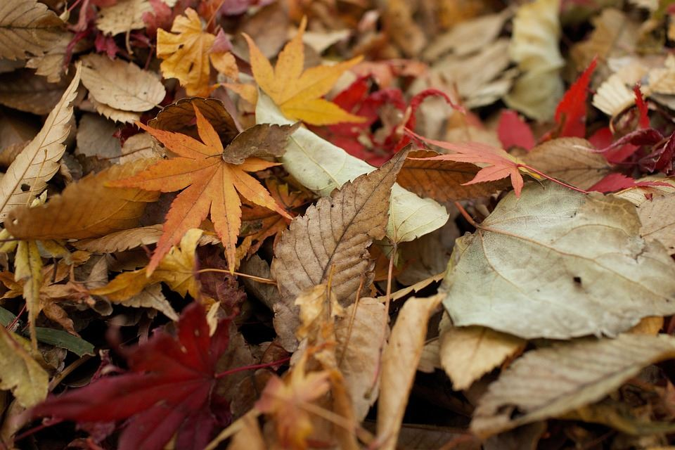 Colorful leaf pile